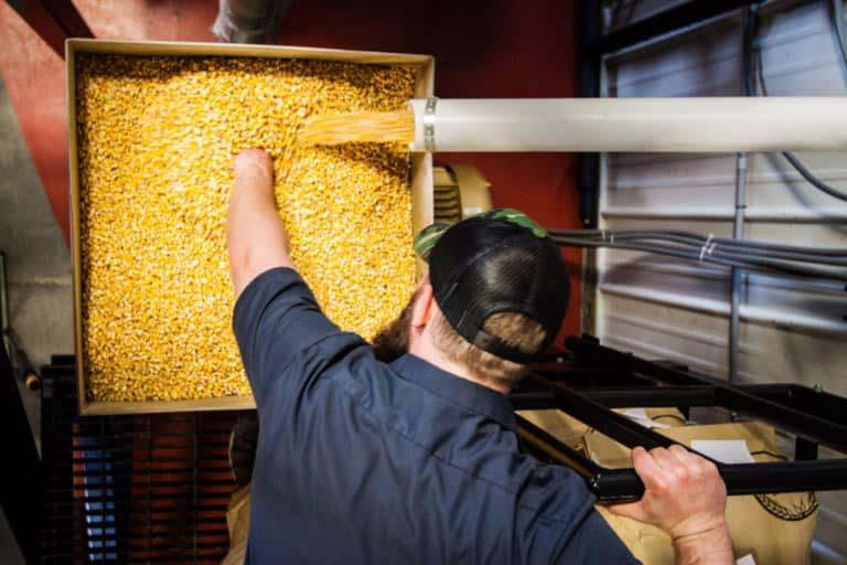 Smooth ambler man with corn