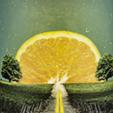 Orange Solara Cramele Recas