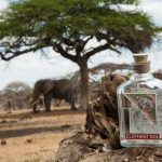 Elephant gin with elephant in background
